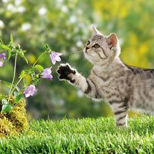 400pcs echte Catnip Samen Katzenminze Katzenminze Bio Garten Kraut Pflanze Samen