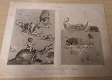 Lacerta: Plate II: Encyclopaedia Londinensis V.12