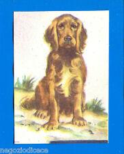 ANIMALI - Lampo 1964 - Figurina-Sticker n. 57 - COCKER -New