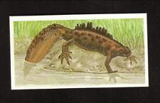 Great Crested Newt--1990 Brooke Bond British Tea Card