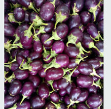 15 Indian Juicy Yummy Egg Pants Seeds,Brinjal Seed Non Gmo, Free Shipping,Usa