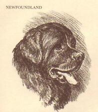 Newfoundland - Vintage Dog Print - 1954 Megargee
