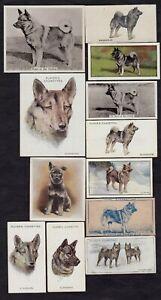 12 Different Vintage NORWEGIAN ELKHOUND Tobacco/Cigarette/Tea Dog Cards Lot