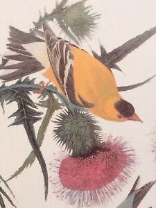 "American Goldfinch or Yellow Bird Audubon Print 11.5"" x 15"" Lithograph 406"