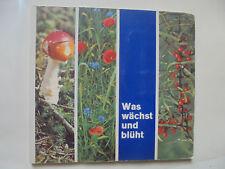 23131 Sammelbild Album Was wächst und blüht Serienbilder Birkel Nudel Werke kpl