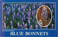 Postcard Texas State Flower, Blue Bonnets