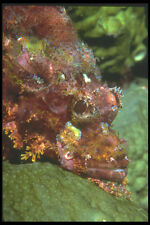 210082 gallineta kimbe Bay Papúa Nueva Guinea A4 Foto Impresión