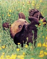 Cute Grizzly Bear Cub Wildlife Wall Decor Art Print Picture (8x10)