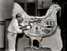 Vintage Large Scale Model Photo of Hen Egg Production Science display Fair 4H ?