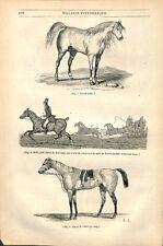 Cheval de Course pur-sang Arabe demi-Sang Cavalerie étrangère Trait GRAVURE 1845