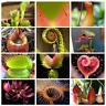 Nepenthes Carnivorous Dionaea Muscipula Giant Clip Venus Flytrap 100 Pcs Seeds V