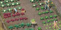 Busch Garden Vegetables 1213  HO Scale (suit OO also)