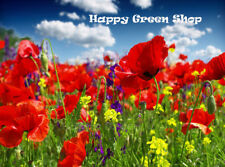 FLOWER CORN RED FIELD POPPY - 84 000 SEEDS - PAPAVER RHOEAS - FLANDERS - ANNUAL
