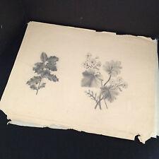 "Antique 1880's Original Pencil Sketches Flowers w/ Leaves - A. Jacobi 19"" x 15"""