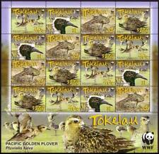 Birds WWF Pacific Golden Plover Sheetlet of 4 sets from Tokelau MNH SG#382-385