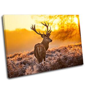 Stag Landscape Animal Canvas  Print Picture 28