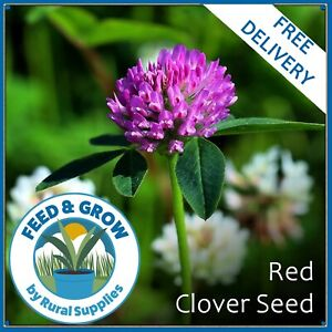Red Clover Seed - GREEN MANURE ORGANIC GARDEN VARIOUS QUANTITIES