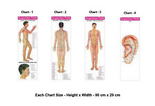 Acupuncture Points (3 Body + 1 Ear) Charts (Set of 4)