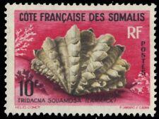 """SOMALI COAST 294 (Mi344) - Fluted Giant Clam """"Tridacna squamosa"""" (pa88929)"""