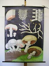 Belles anciennes écoles carte wiesenchamignon champignons jkq 83x113 vintage map ~ 1970