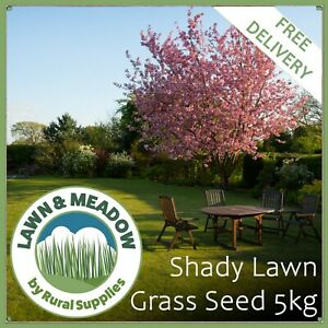 Shady Area Grass Seed 5KG - TOUGH QUALITY LAWN SEED FOR DARK & SHADED AREAS