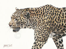 Passing Leopard by Lindsay Scott Art Print Poster Safari Wildlife Decor 29x38