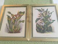 2 antique botanical prints ,framed