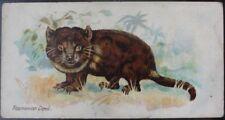Single: Tasmanian Devil 'WILD ANIMALS OF THE WORLD (No Ltd)' John Player 1901