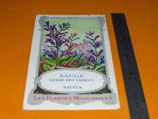 CHROMO 1900-1920 BON POINT ECOLE PLANTE MEDICINALE SAUGE SALVIA OFFICINALIS