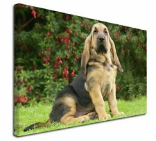 "Bloodhound Dog 30""x20"" Wall Art Canvas, Extra Large Picture Print , AD-BL1-C3020"