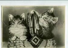 3076371 Lovely Kittens in Basket Old Photo Russian Pc