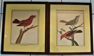 *3164* authentique paire de gravures oiseaux anciennes  martinet