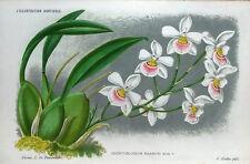 ORCHID ODONTOGLOSSUM KRAMERI Linden Antique Botanical Vintage Flower Print 1885