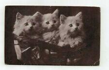 Antique 1907 Sheahan Cat Kitten Photo post card 3 Fluffy White Kittens in Basket