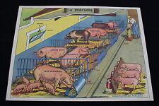 R197 Affiche scolaire papier MDI 5 PORCHERIE 6 INDUSTRIE LAITIERE LAIT 91*68 cm