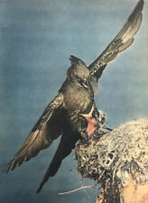 Bird Baby Momma Mother Animal Magazine Print Photo Vintage Nest Wild Original
