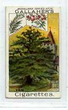 (Jc1805-100)  GALLAHERS,WOODLAND TREES,THE YEW TREE,1912#16