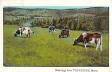 Thorndike Maine Cow Pasture Greeting Antique Postcard K83730