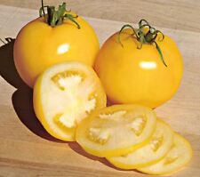 Peach tomato seeds non-gmo heirloom open pollinated CAN LOWER CHOLESTEROL!