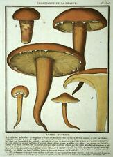 L'Agaric of Wood Agaricus Silvicola Engraving Mushroom, Stone Bulliard 1780