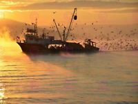 Photography Seascape Fishing Trawler Flock Seagulls Sunrise Canvas Art Print