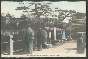 Postcard Japan the Wisteria Blossom at Kameido Tokyo antique view