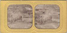 Normanie Scène rurale Stéréo vintage albumine ca 1860