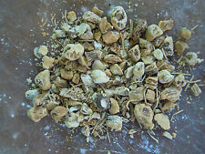 Solomon's Seal Root herb spells Wiccan Pagan Spell Supplies witchcraft