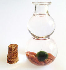 Baby Lucky Plant Marimo Moss Ball in Glass Bottle with Brown Goldstone Chips