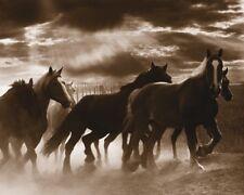 Running Horses & Sunbeams by Monte Nagler Art Print - Horse Western Poster 11x14