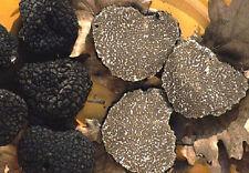 Fresh black truffles italian. Precious T.Aestivum. 180g. Mushrooms 6,3oz