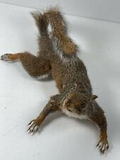 Vintage Squirrel Taxidermy #5 nice taxidermy wall mount