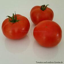 10+ SIVER FIR TREE o. SILBERTANNE russische Tomate Freilandanbau Kübelkultur