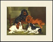 CAVALIER KING CHARLES AND ENGLISH TOY SPANIEL DOGS DOG PRINT READY TO FRAME